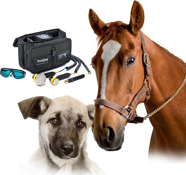 Häst & Hund
